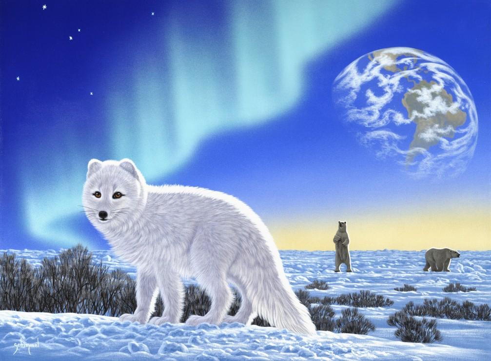 schim-schimmel-artic-fox