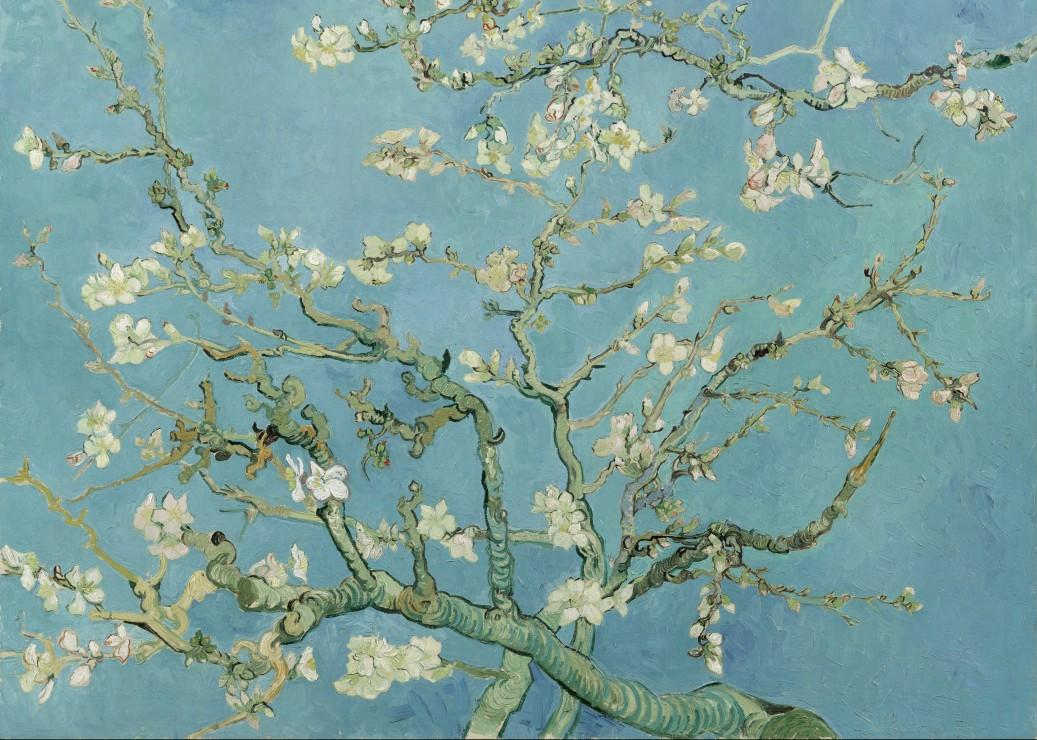 vincent-van-gogh-amandier-en-fleurs-1890