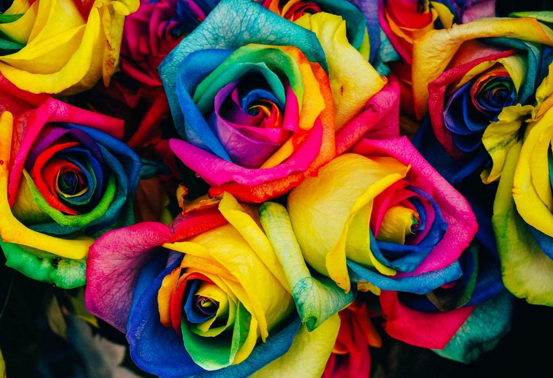 pieces-xxl-roses