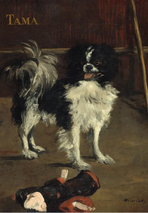 edouard-manet-tama-le-chien-japonais-1875