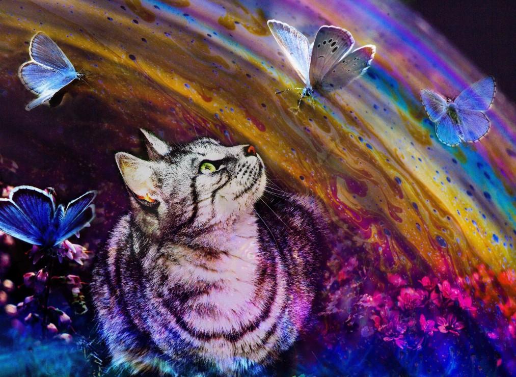 le-chat-et-les-papillons