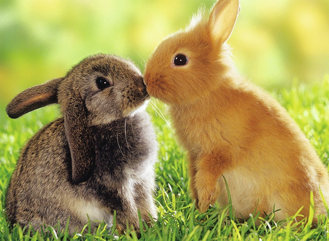 bisous-de-lapins