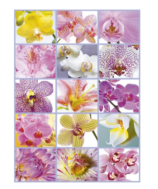 collage-d-orchidees