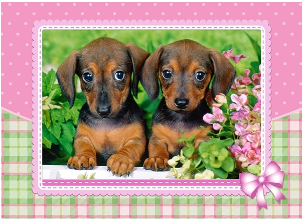 dachshund-puppies, 3.52 EUR @ go
