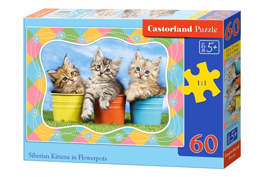 chatons-siberiens-dans-des-pots-de-fleurs, 3.50 EUR @ go