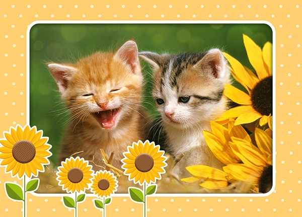 deux-chatons-dans-des-tournesols