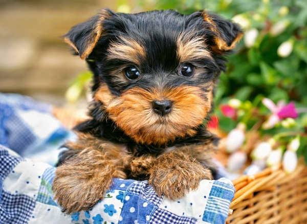 puppy-on-a-picnic