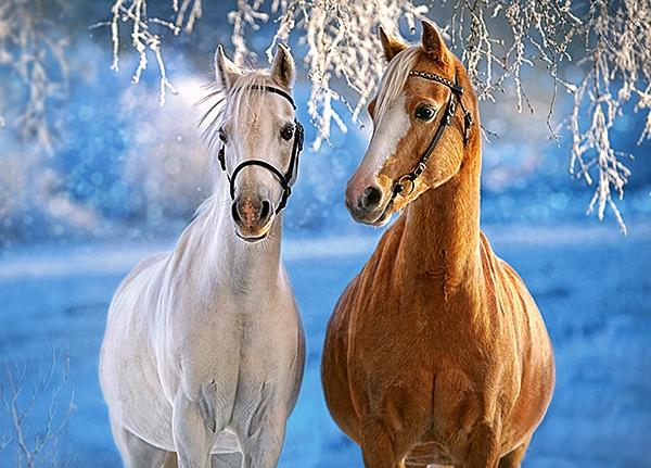 the-winter-horses