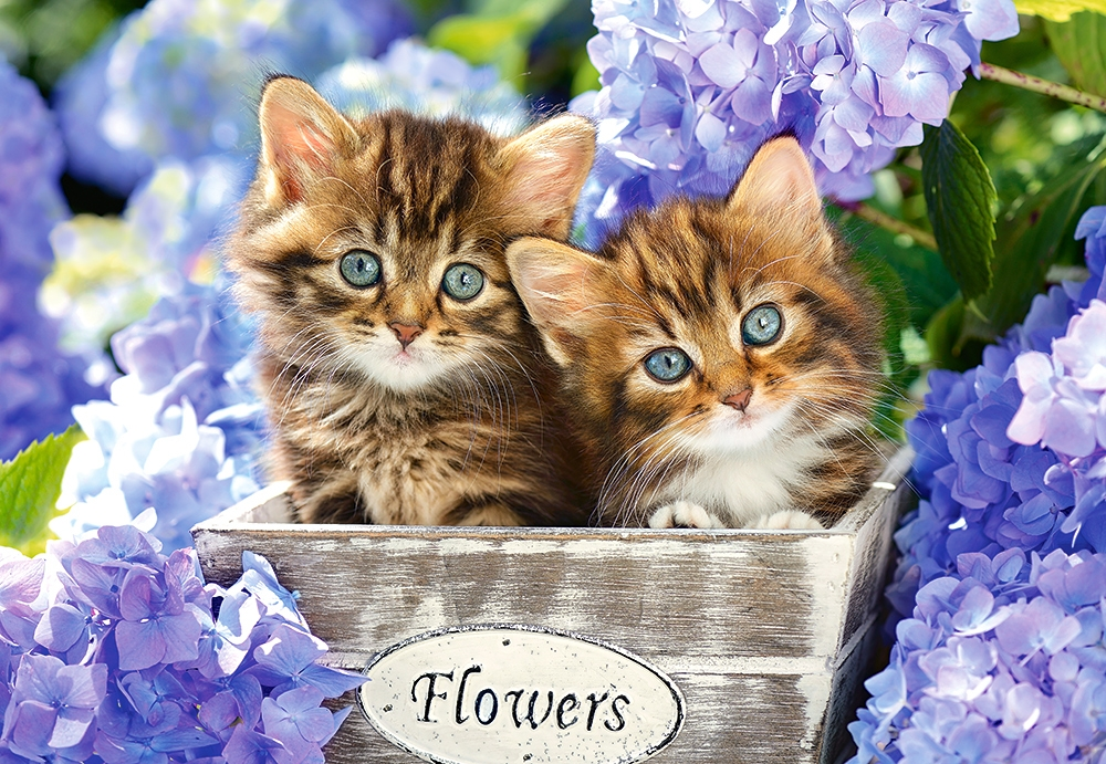 chatons-dans-les-fleurs