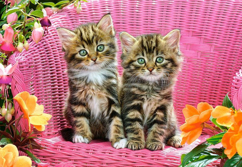 kittens-on-garden-chair