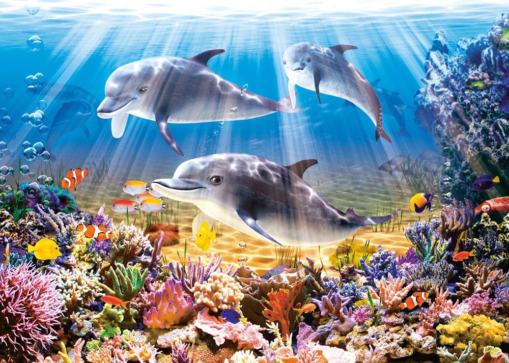 le-monde-des-dauphins