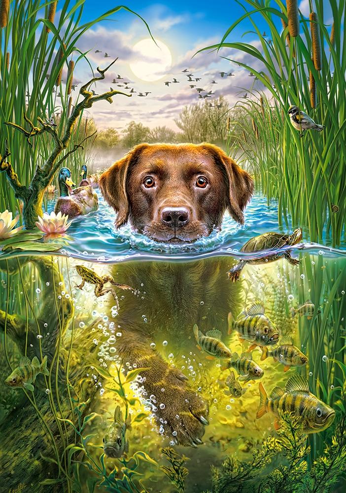 swimming-dog, 5.95 EUR @ go