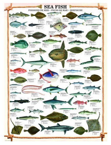 les-poissons