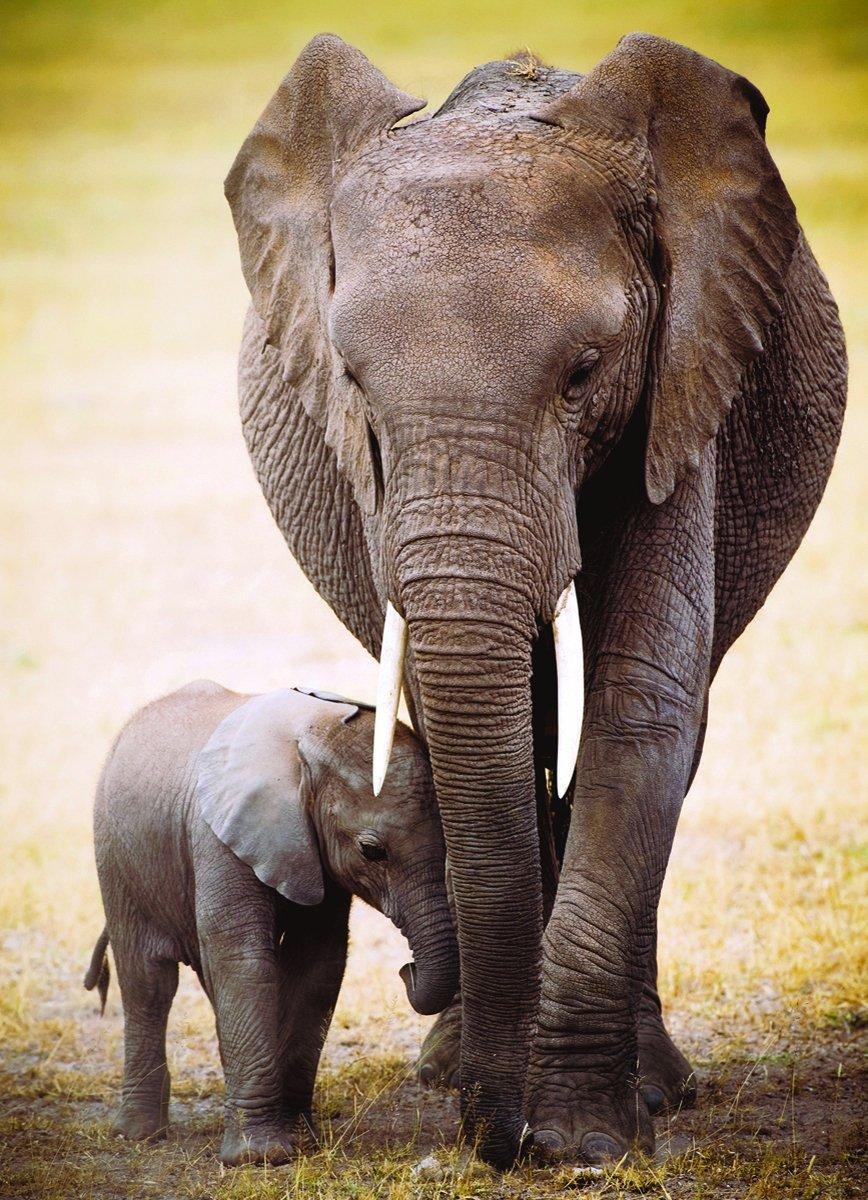 l-elephant-et-l-elephanteau