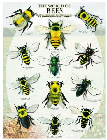 le-monde-des-abeilles