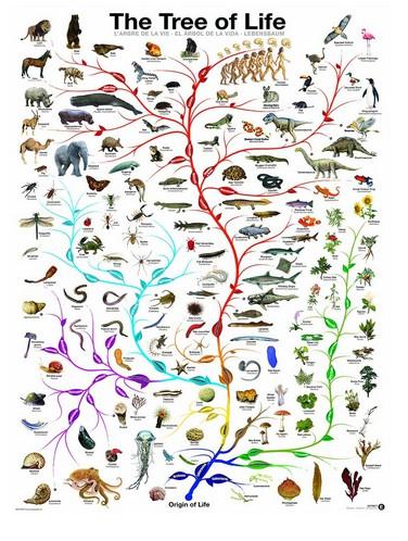 l-evolution-l-arbre-de-vie