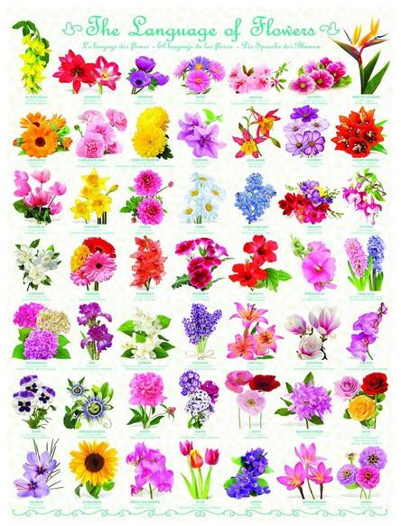 le-language-des-fleurs