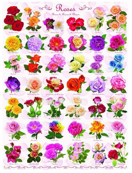 roses, 12.95 EUR @ go