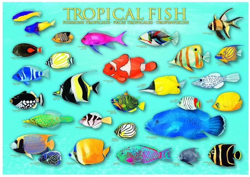 poissons-tropicaux