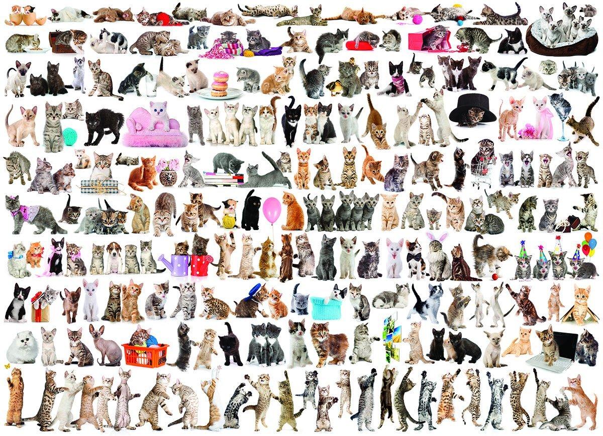 un-monde-de-chats