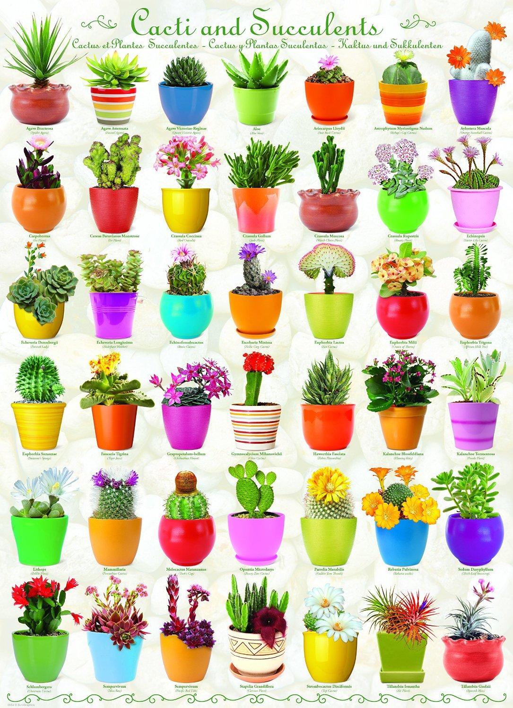 cactus-et-plantes-succulentes