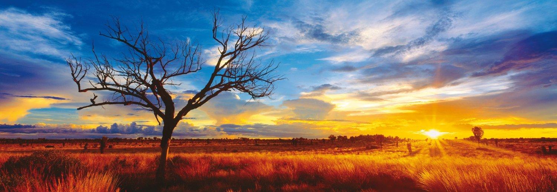 mark-gray-australie-oak-du-desert-au-coucher-du-soleil