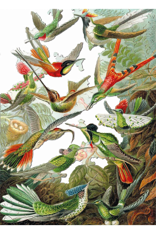 puzzle-en-bois-ernst-haeckel-les-colibris