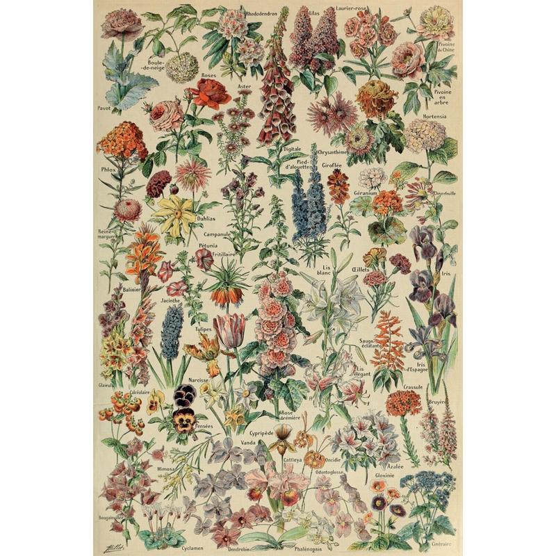 puzzle-en-bois-adolphe-millot-fleurs-pour-tous