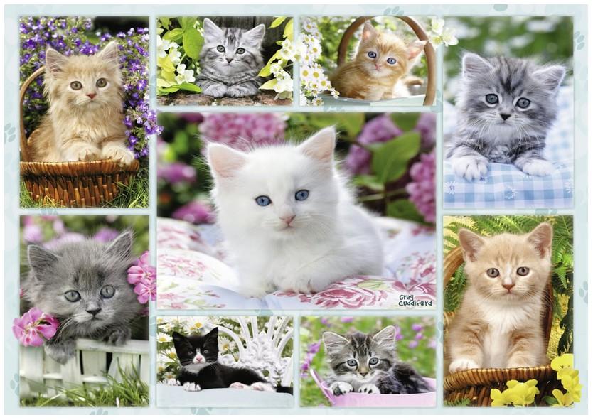 chatons-dans-leurs-corbeilles