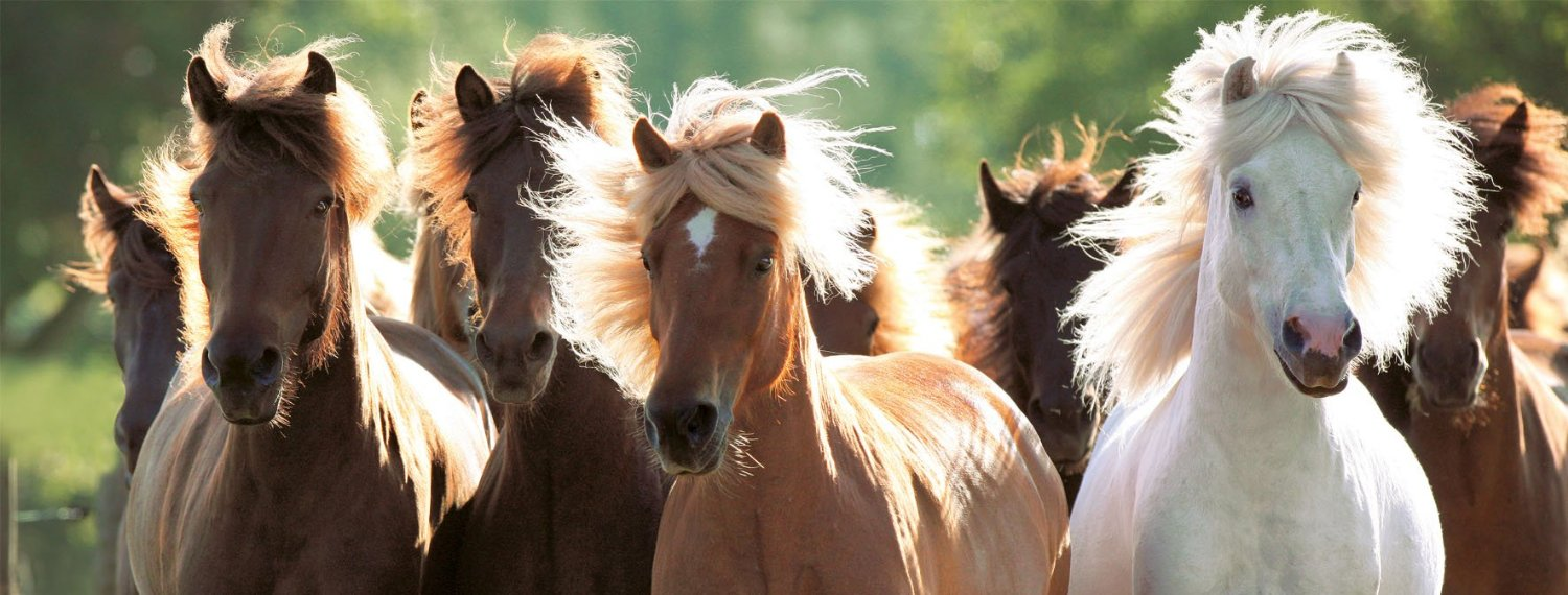 chevaux-sauvages