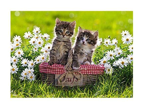 pique-nique-des-chatons-dans-la-prairie
