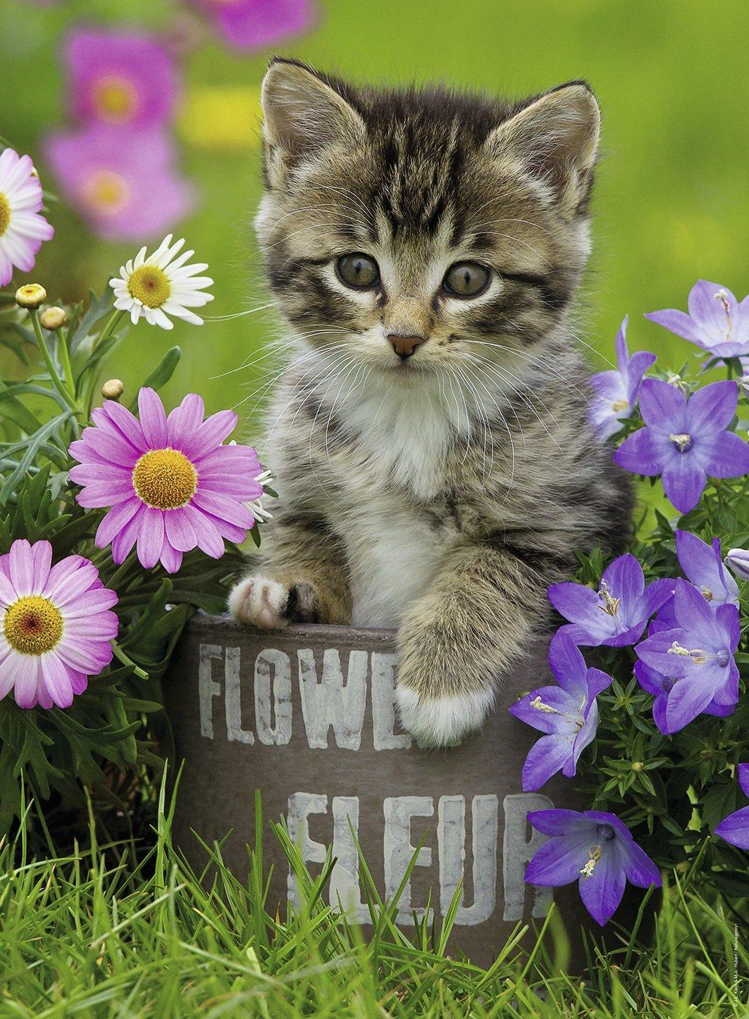 chaton-dans-les-fleurs