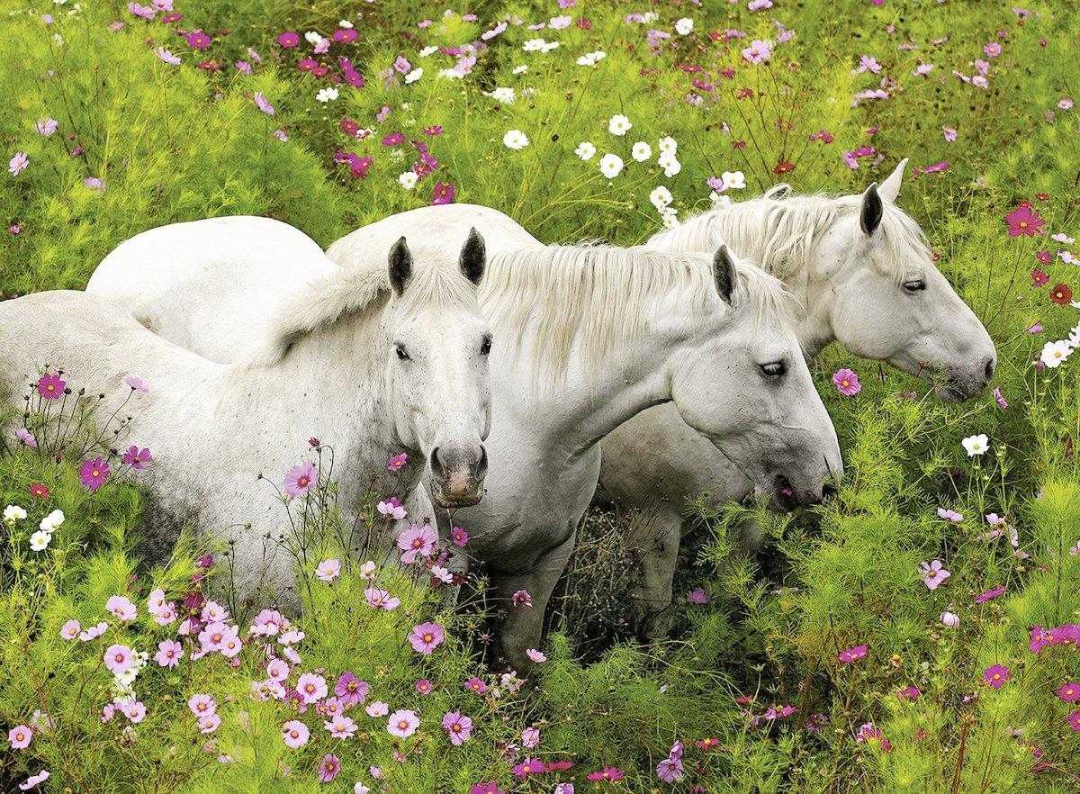 pieces-xxl-chevaux-dans-la-campagne