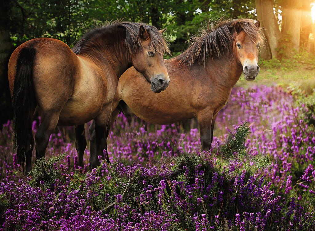 poneys-dans-les-fleurs