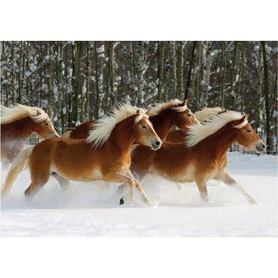 puzzle-special-difficile-cheval-haflinger-n-4