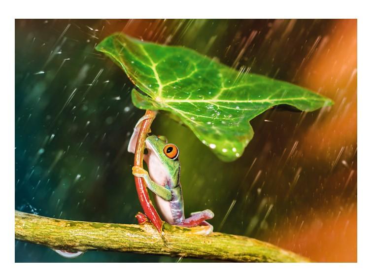 green-umbrella