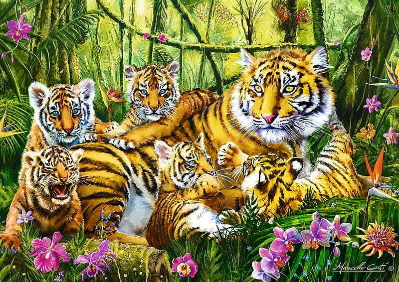 famille-de-tigres