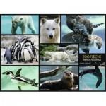 Nathan-86870 Animaux du Zoo