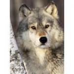 Nathan-87142 Le Regard du Loup