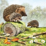 Otter-House-Puzzle-73566 Hedgehog Family