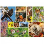 Otter-House-Puzzle-75085 RSPB - Great British Wildlife
