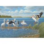 Cobble-Hill-51736 John Wilson : Pelicans