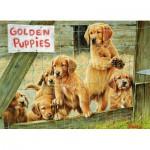 Cobble-Hill-57152 Chiots Golden