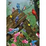 Cobble-Hill-57190 Oiseaux de la Forêt