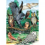 Cobble-Hill-58810 North American Owls