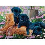 Cobble-Hill-58851 Les chiots Labrador Noirs