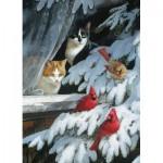 Cobble-Hill-70041 Jack Pine - Bird Watchers