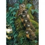 Cobble-Hill-80018 Family Tree