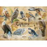 Cobble-Hill-80023 Common Raptors