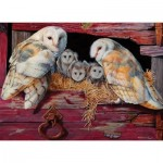 Cobble-Hill-80052 Barn Owls